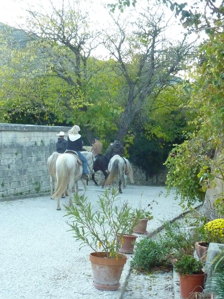 Cheval-dans-le-Luberon-02